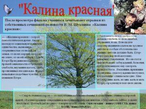 Калина красная характеристика образа Егора Прокудина