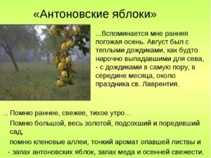 Антоновские яблоки характеристика образа повествователя